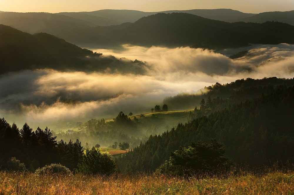 valley mists
