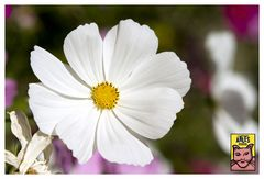 Van Gogh' s flower