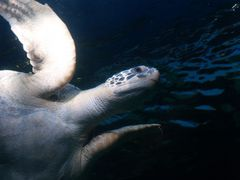 Vancouver Aquarium