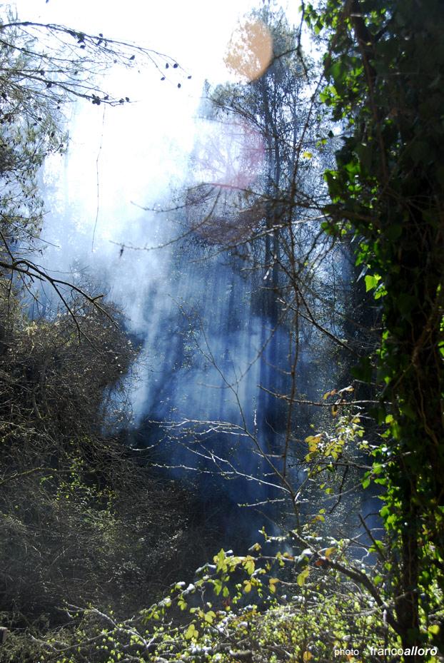 Vapori primaverili dentro il bosco