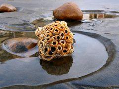 Varado en la orilla