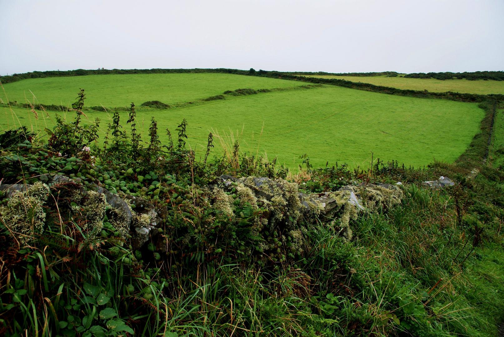 Variation in Grün_Cornwall