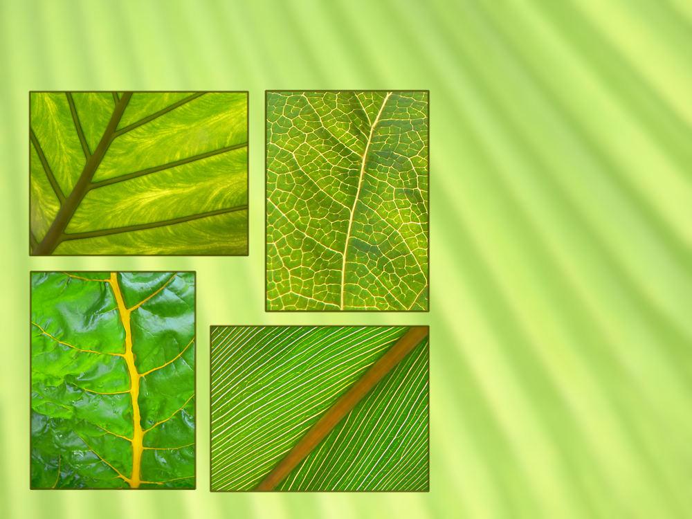 Variationen in Chlorophyll