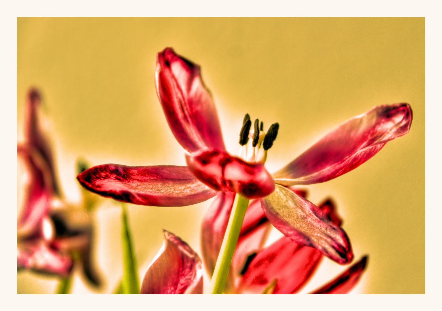 Vasenfrühling