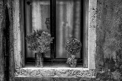 Vases à la fenêtre