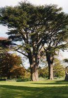 Vater Baum