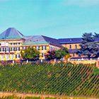 VDP Weingut Schloss Johannisberg