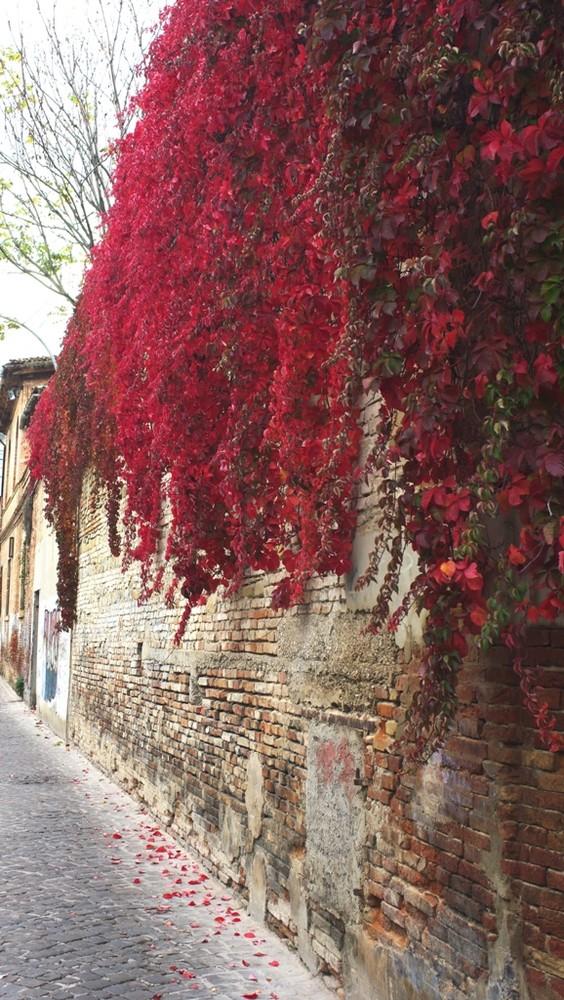 Vecchia Pesaro vestita dei colori autunnali.