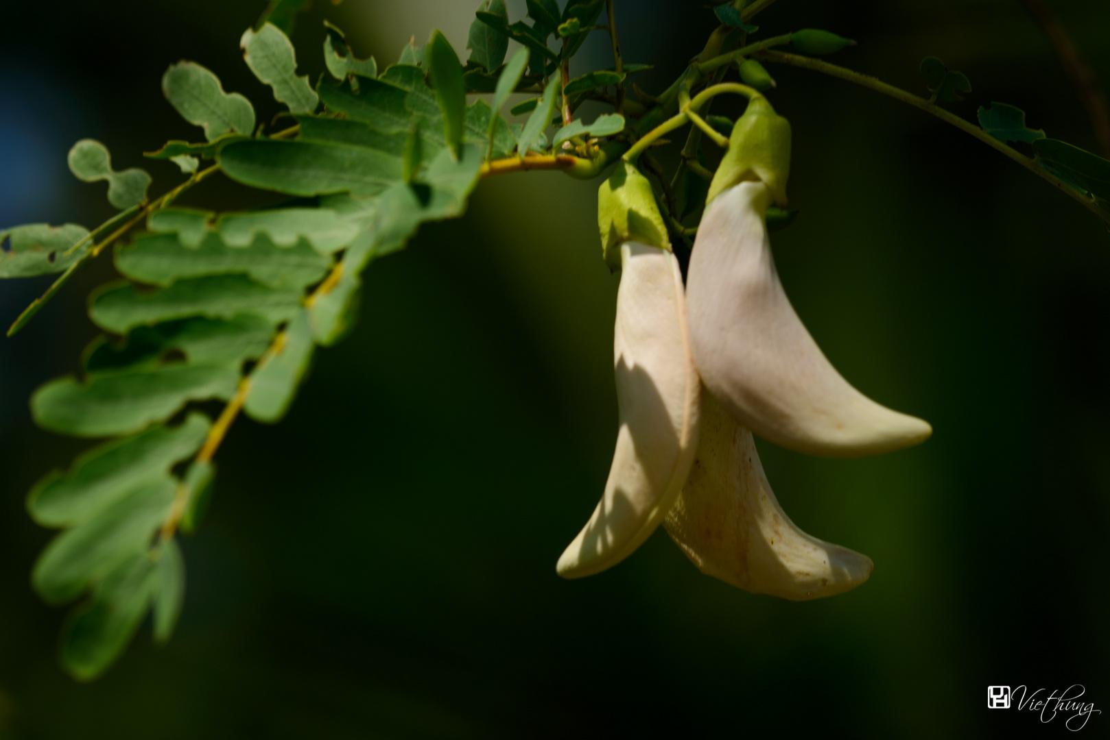 Vegetable Hummingbird
