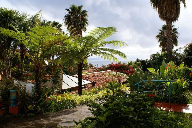 Vegetation auf Madeira