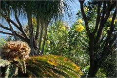 Vegetation auf Madeira II