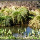 Végétation des marais .