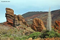 Vegetation im Teide Gebiet Las Canadas 2