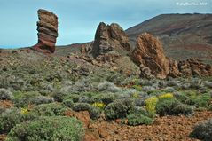 Vegetation im Teide Gebiet Las Canadas 3