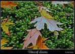 Veins of Leaves