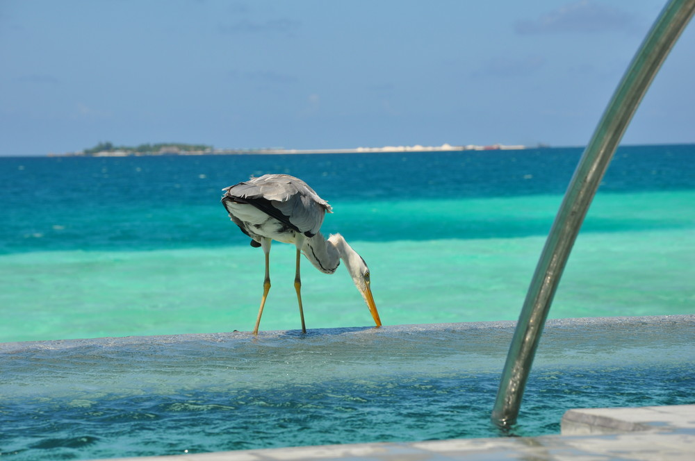 velassaru atoll pointe nord de malé