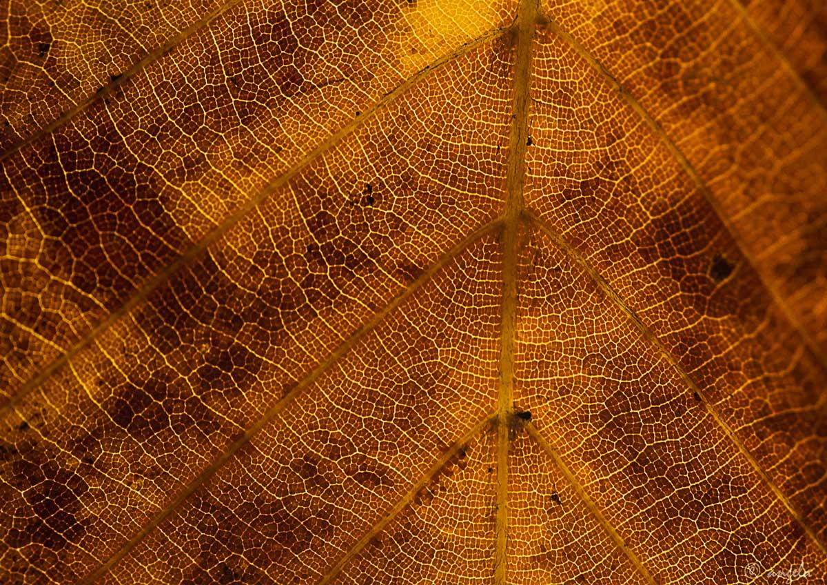 Venas vegetales II (otoño)