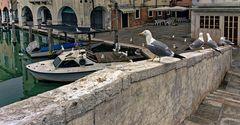 VENEDIG   - Chioggia  -