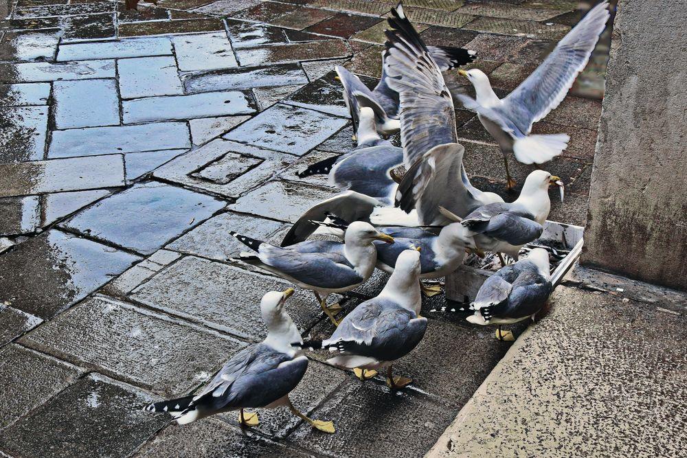 Venedig, Heisse Schlacht am kalten Büffet