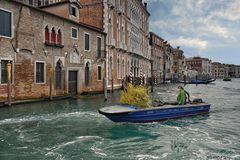 Venedig - Neue Bepflanzung im Hotel
