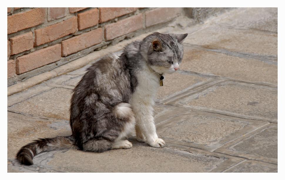 Venezianische Katze ;-)