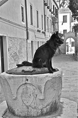 venezianischer brunnenhund