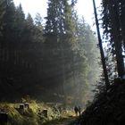 Venninger Wald