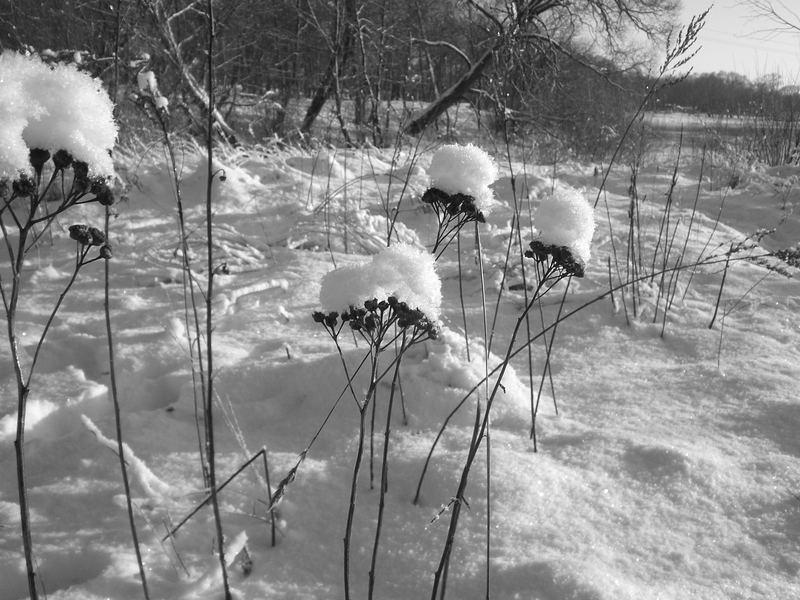 Venta winter