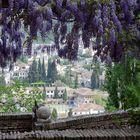 Ventana desde la Alhambra acompañadas de Glicinias.