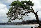 Vento a Maui-Hawaii