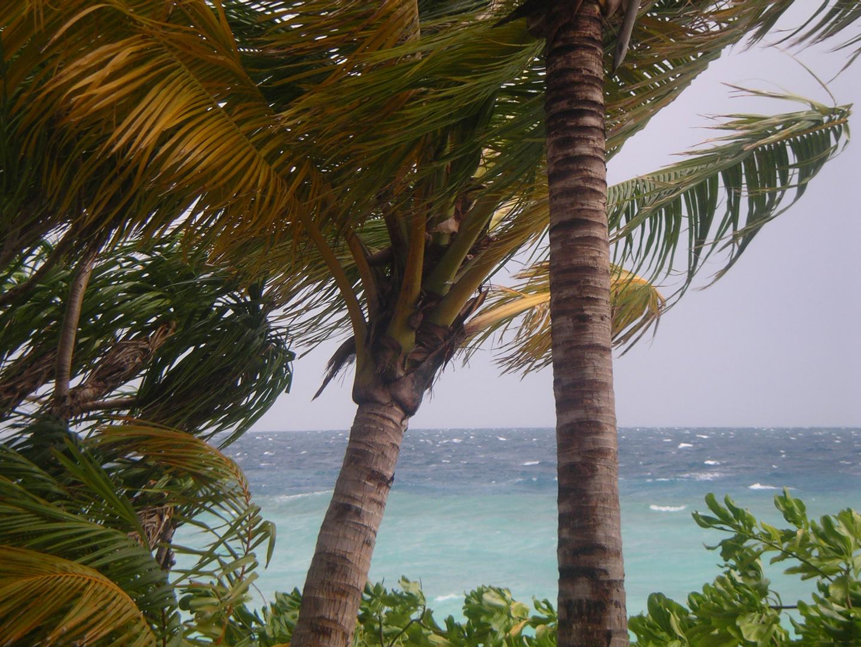 vento maldiviano