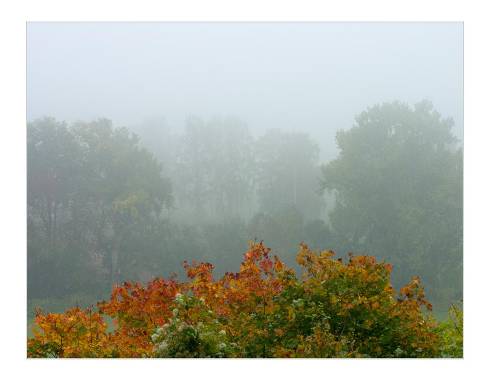 """...verblassende Herbstfarben gegen das Grau... - oder: ...jetzt halt mit """"Halt"""" -... ;-))"""