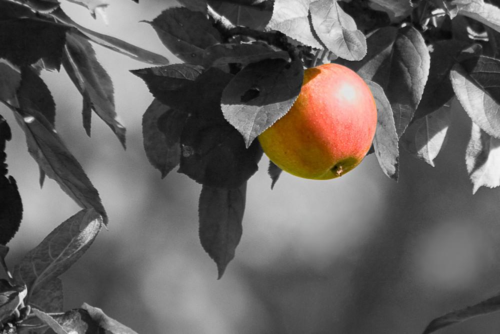 Verbotener Apfel