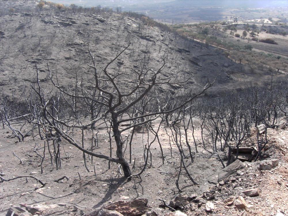 Verbrannte Erde