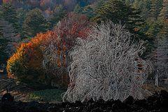 Verbrannter Baum reload