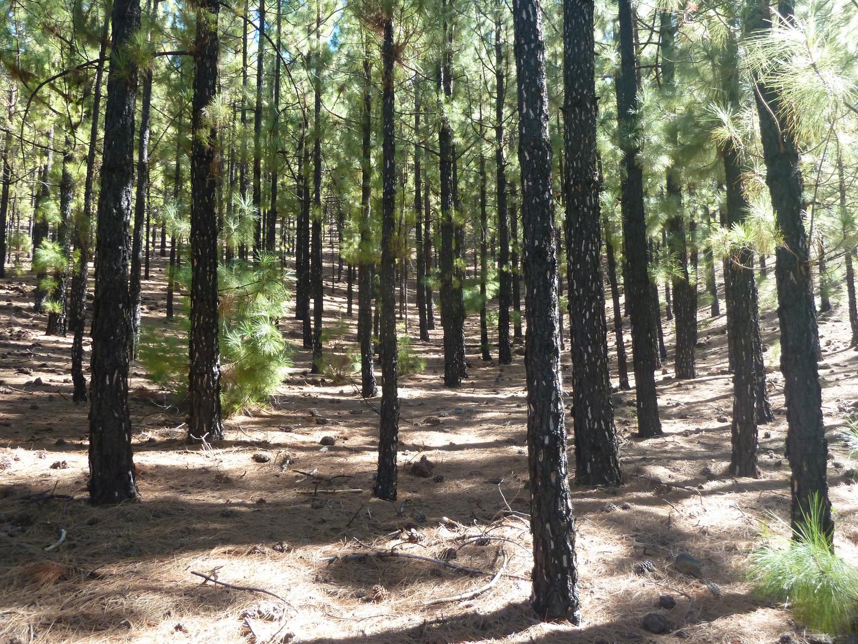 Verbrannter Wald
