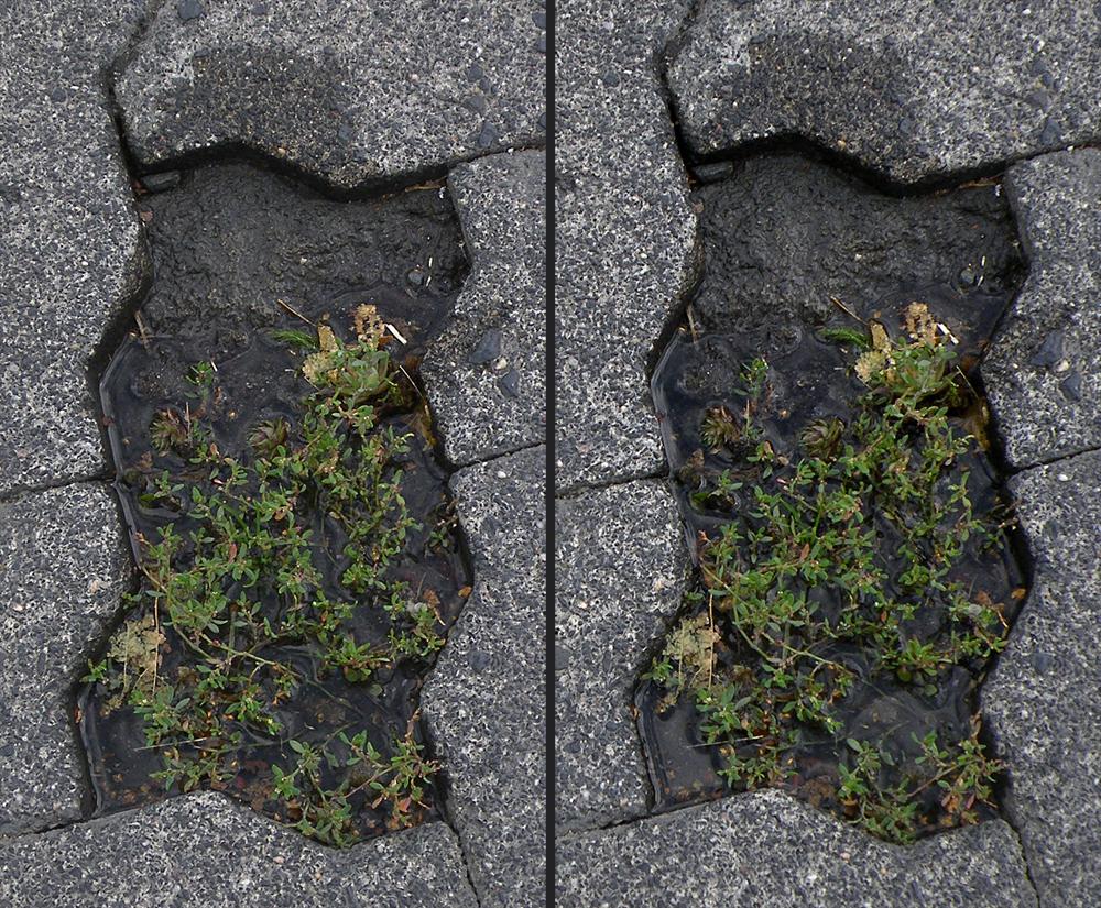 Verbundsteingarten aktuell