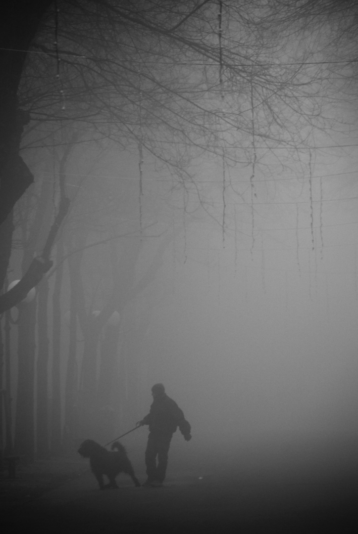 Vercelli, nebbia in viale Garibaldi