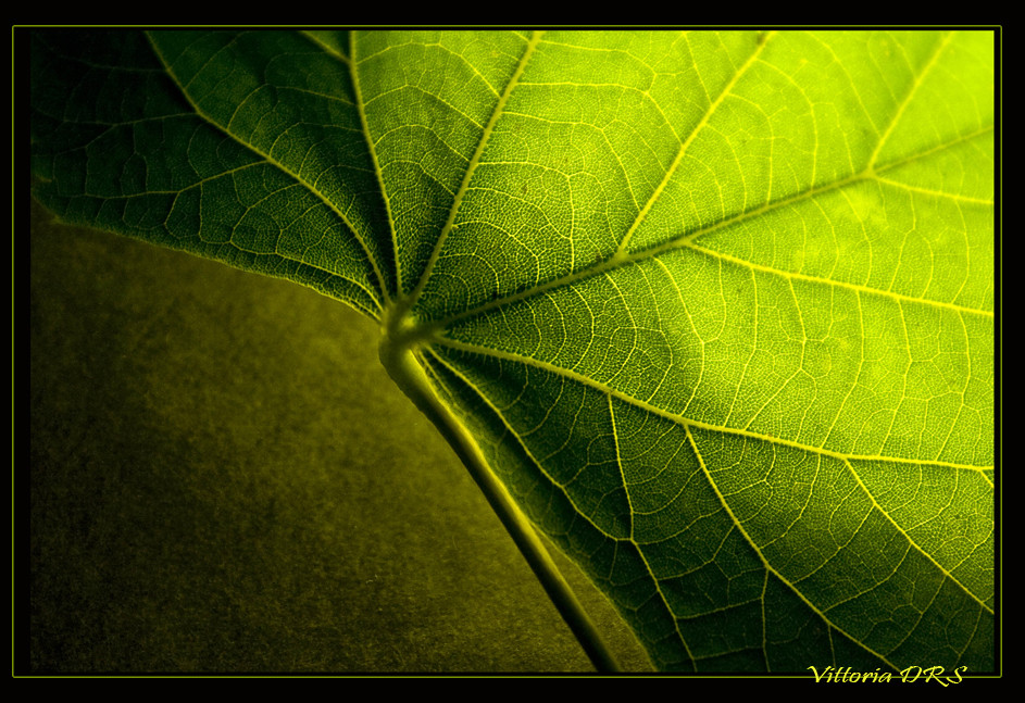 verde autunnale