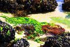 Verde entrgado por la marea