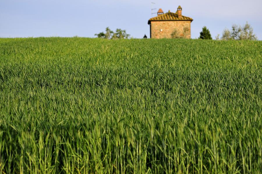 Verde grano