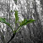 Verde Primavera