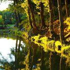 Verde splendore