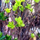 verde y seco