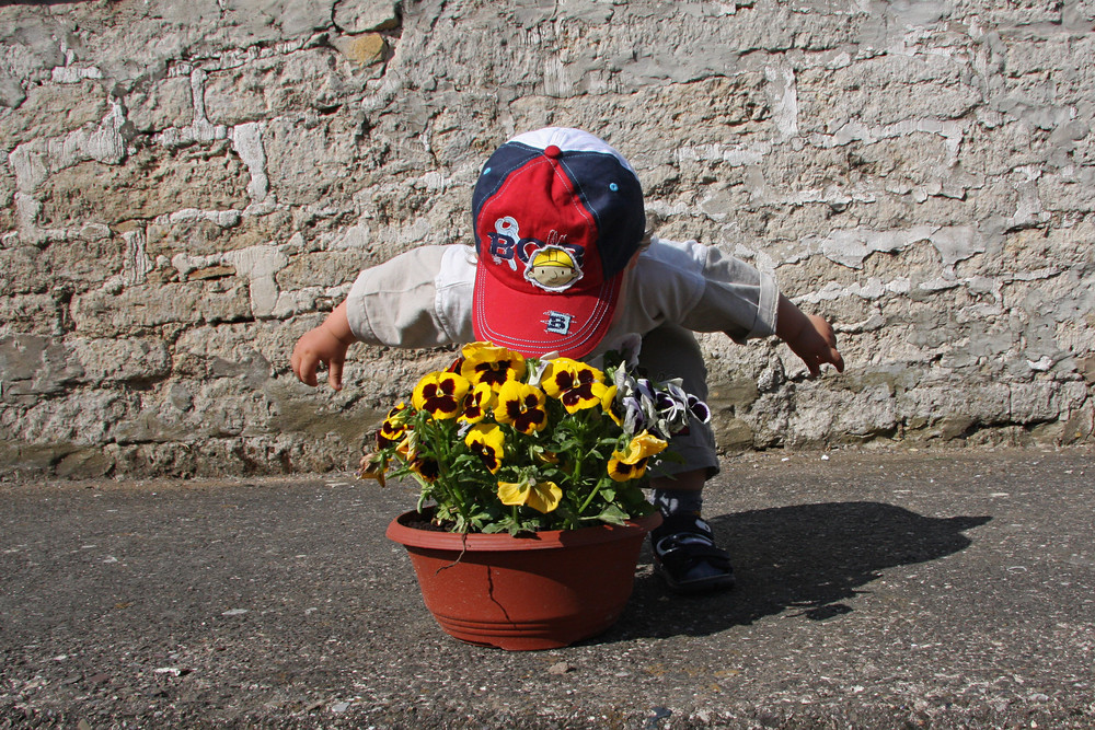 Verdeckter Ermittler in Sachen Blütenduft . (Zweiter Geburtstag von Marius)