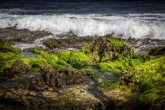 Verdes marinos