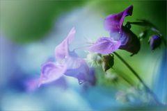 Verdoppeltes Mittwochsblümchen