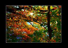""""""" Verdrängung der grauen Herbsttage """""""
