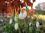 Verfrühter Frühling II