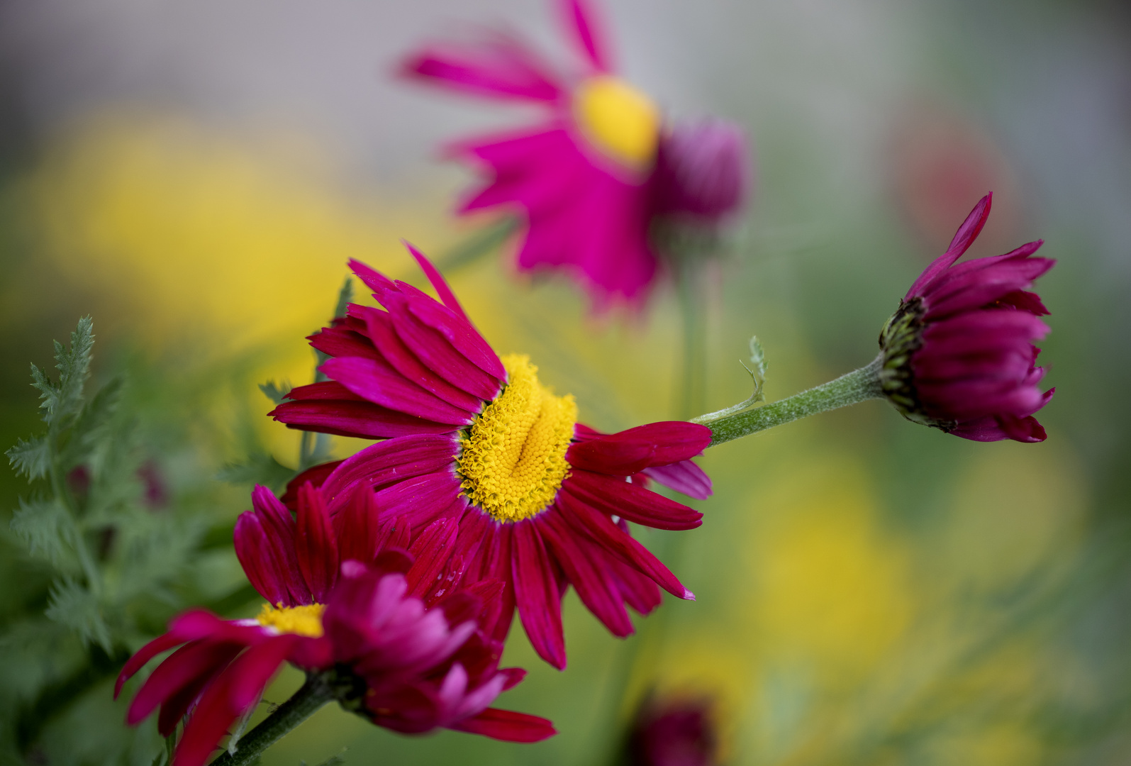 Verfrühtes Mittwochsblümchen